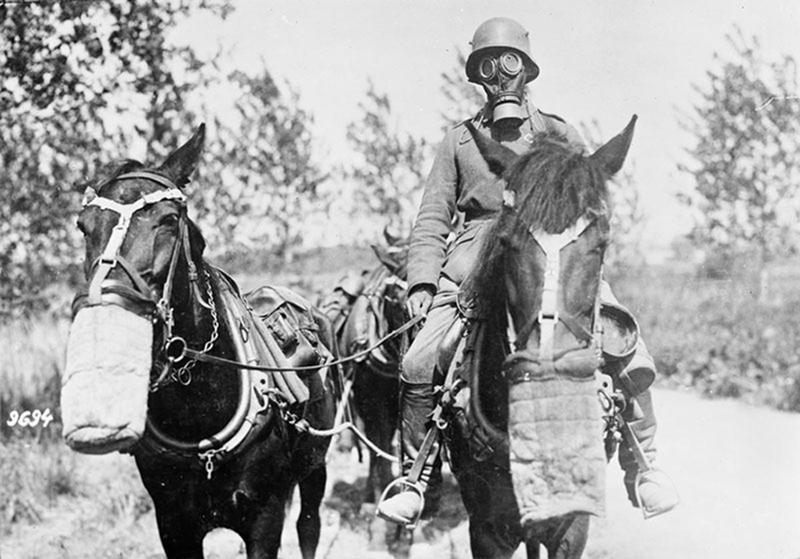 ww1-animals-52
