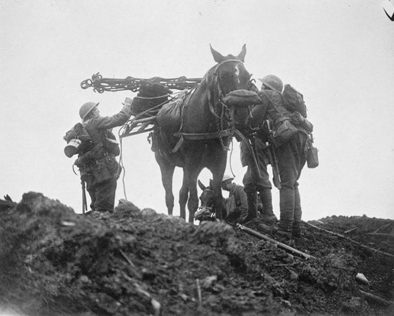 ww1-animals-51