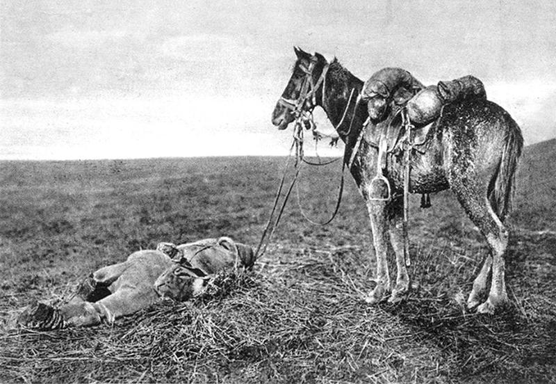 ww1-animals-28