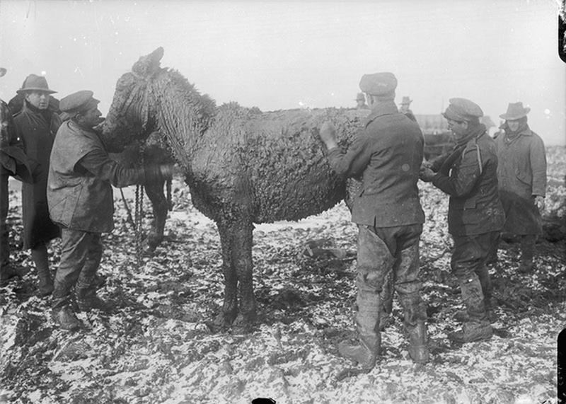 ww1-animals-50