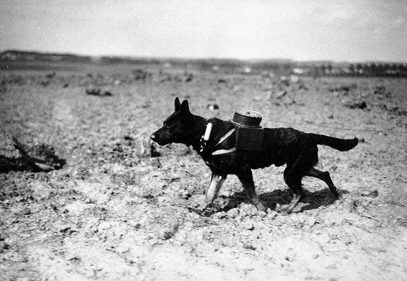 ww1-animals-13