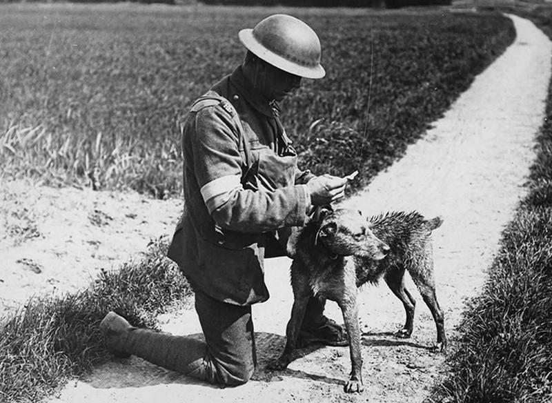 ww1-animals-34