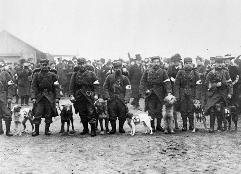 ww1-animals-46