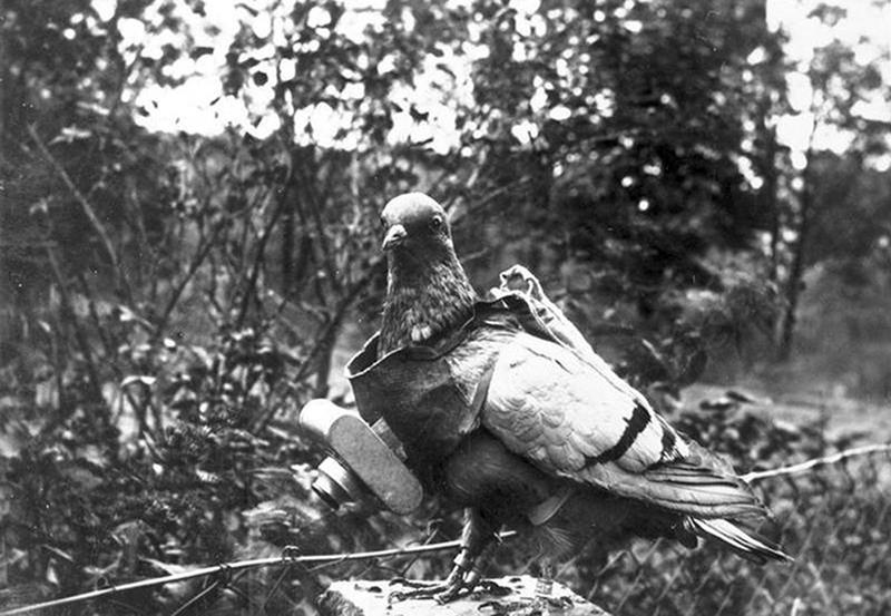 ww1-animals-5