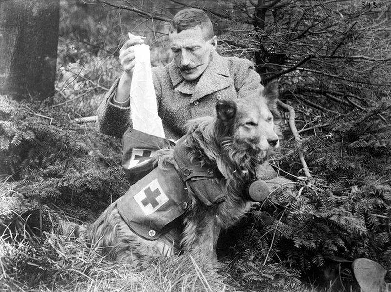 ww1-animals-4