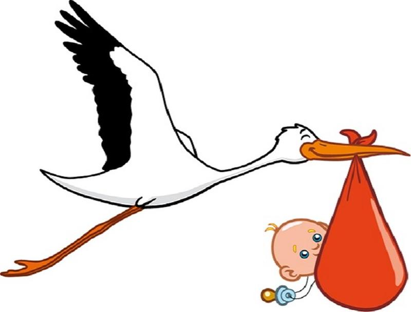Special Delivery Why Storks Bring Babies History Daily